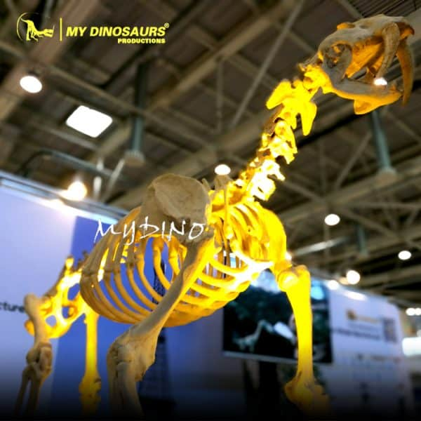 animal skelette