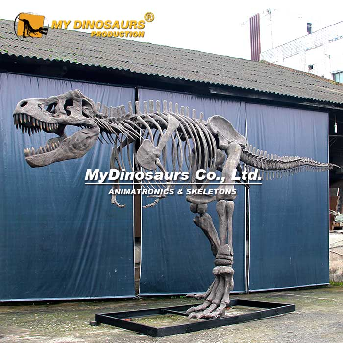 Complete T rex skeleton
