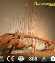 dimetrodon skeleton