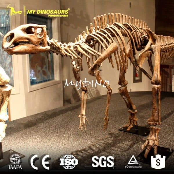 Museum quality dino skeleton replica