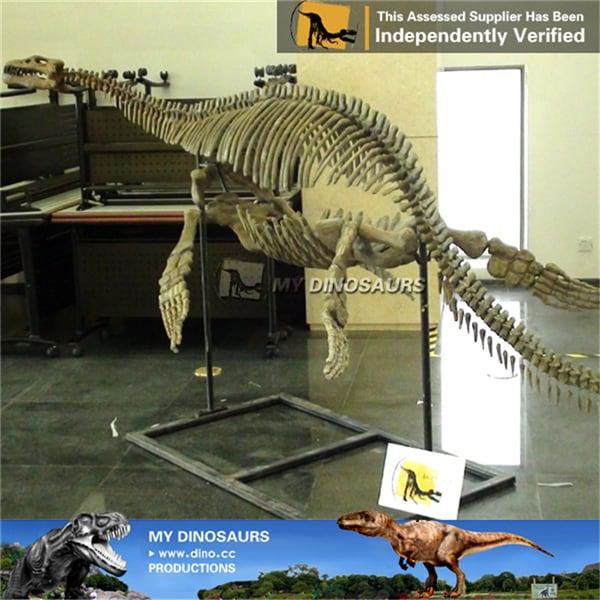 Pliosaurus skeleton