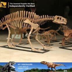 lotosaurus skeleton