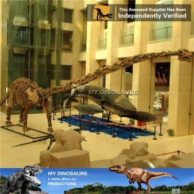 Skeleton Of Mamenchisaurus