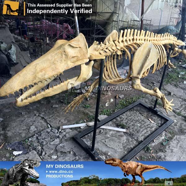 Ambulocetus skeleton