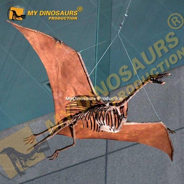 Angustinaripterus Skeleton 2