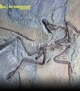 Archaeopteryx Fossil Wall 1