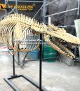 Dorudon skeleton 1