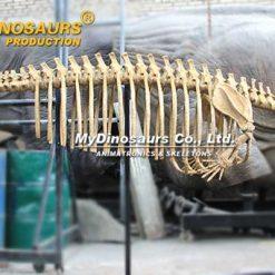 Dorudon skeleton