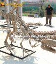 Gasosaurus skeleton 1