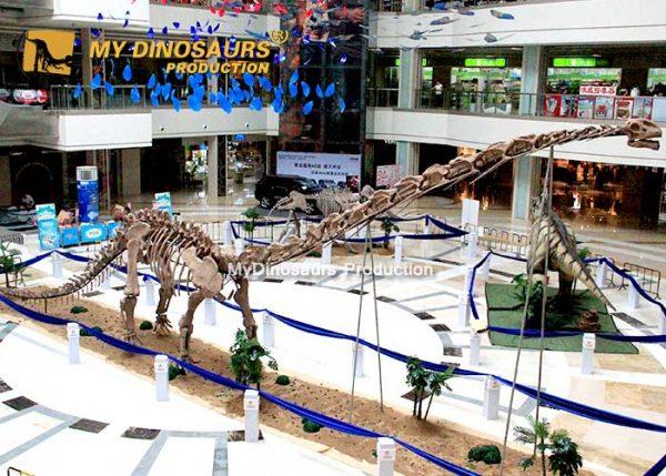 Mamenchisaurus skeleton 4