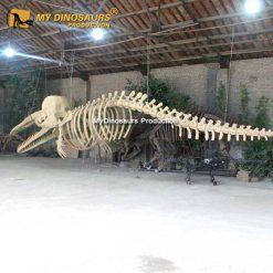 Sperm Whale Skeleton 1