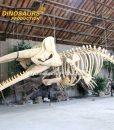Sperm Whale Skeleton 2