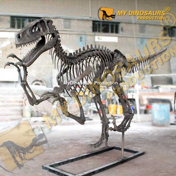 Utahraptor skeleton 2