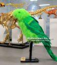 animatronic bird