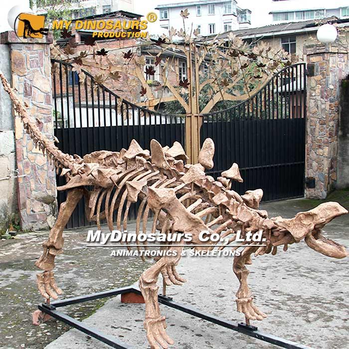 ankylosaur skeleton 2