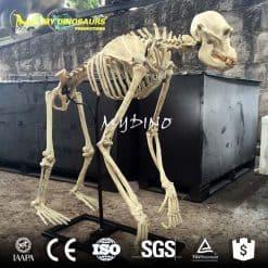 artificial animal skeleton