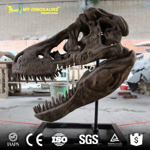 dinosaur fossil skull
