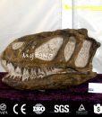 Yangchuanosaurus skull1