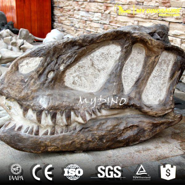Yangchuanosaurus skull