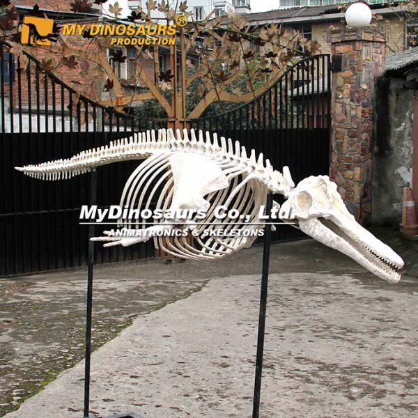 dolphin skeleton 2