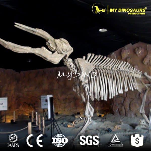 Platybelodon skeleton