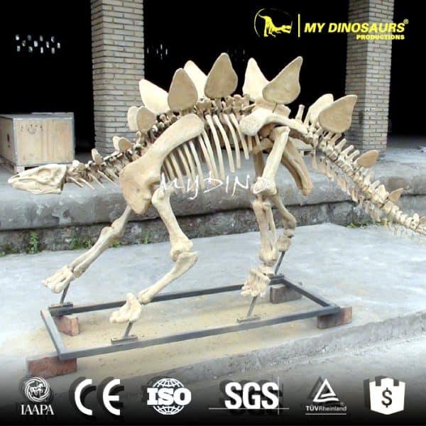 life size life size stegosaurus skeleton