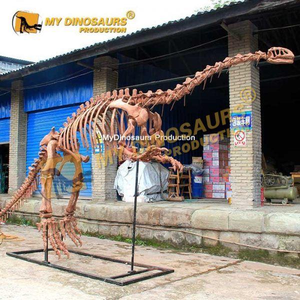 lufengosaurus skeleton 2