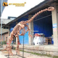 lufengosaurus skeleton