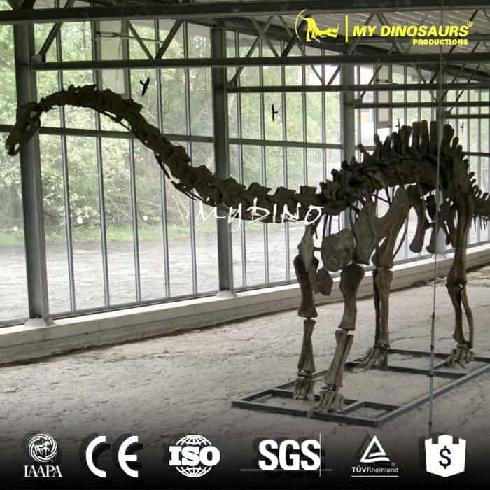 playground Apatosaurus skeleton