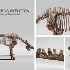 rhinoceros skeleton