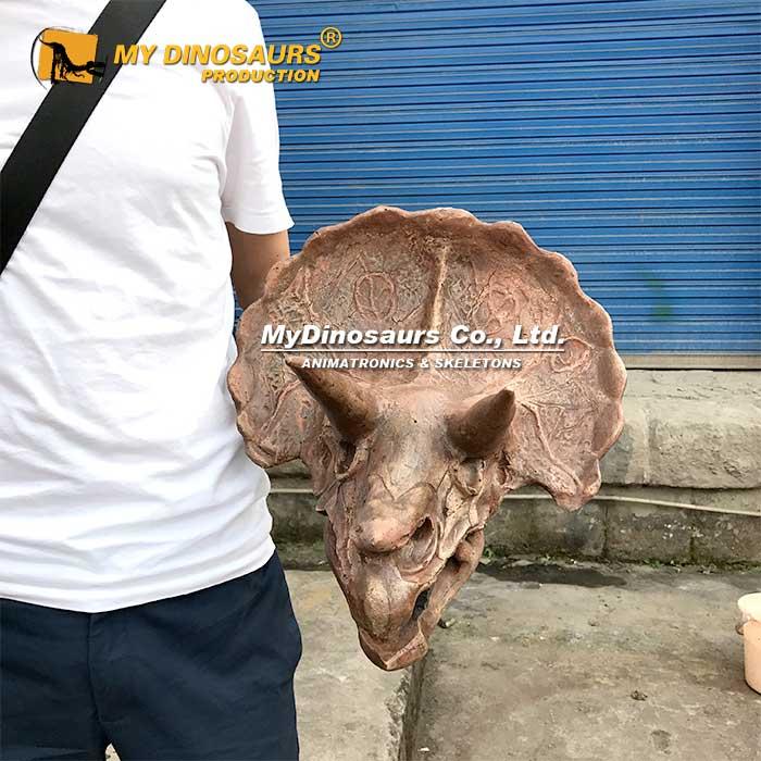 small triceratops skull 1