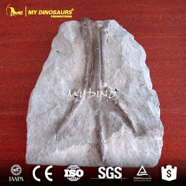 wholesale sales fossils