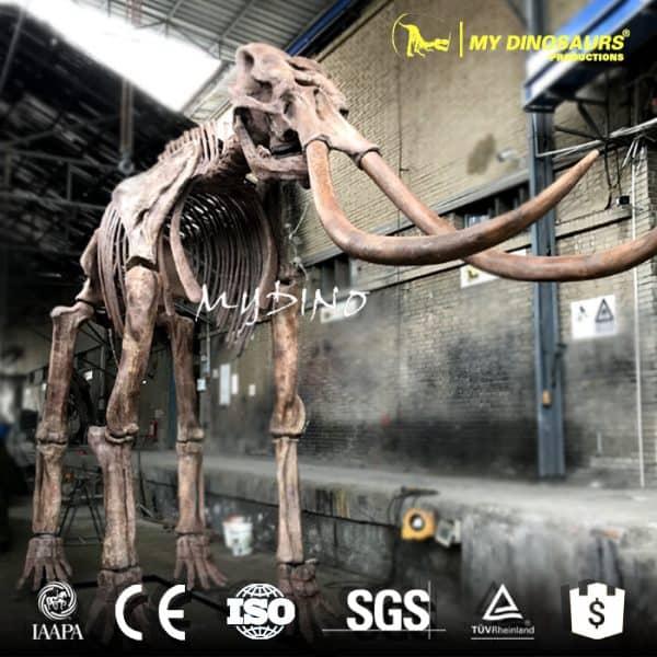 Palaeoloxodon Elephant Skeleton