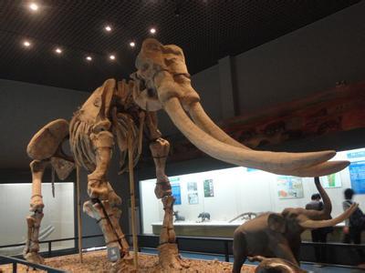 Palaeoloxodon huaihoensis