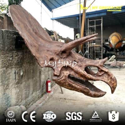 animal skulls for sale picture