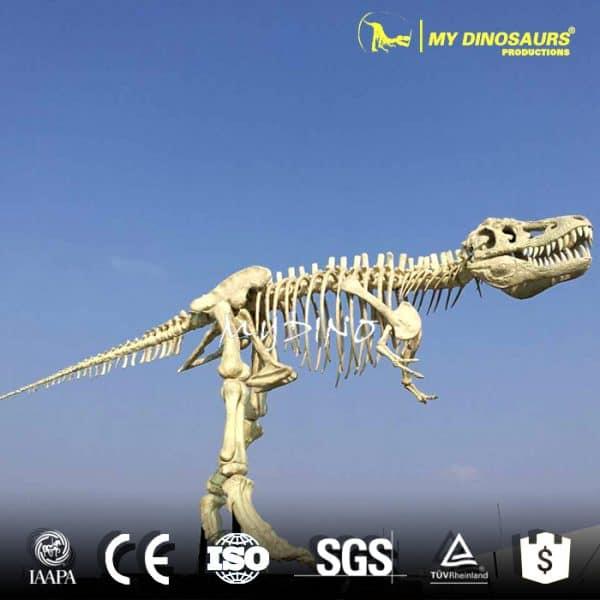 museum dinosaur skeleton replicas