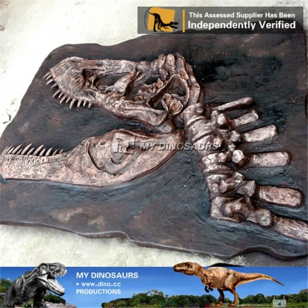 allosaurus head fossil wall 3