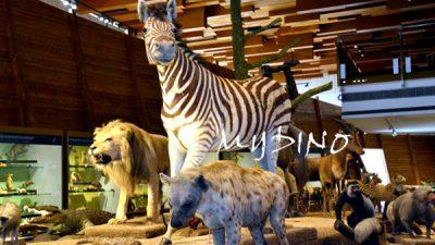 artificial animal exhibition