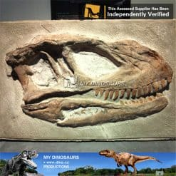 allosaurus head fossil wall