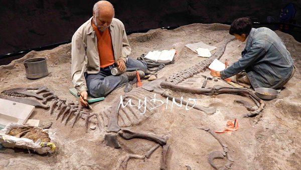 dinosaur digging site