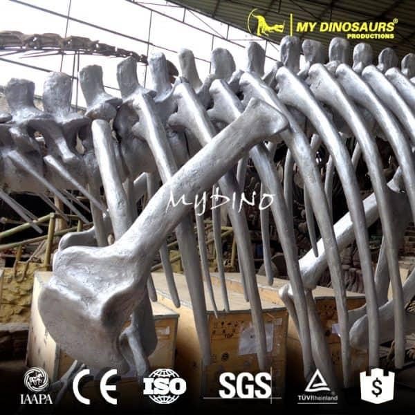 dinosaur ribcage skeleton