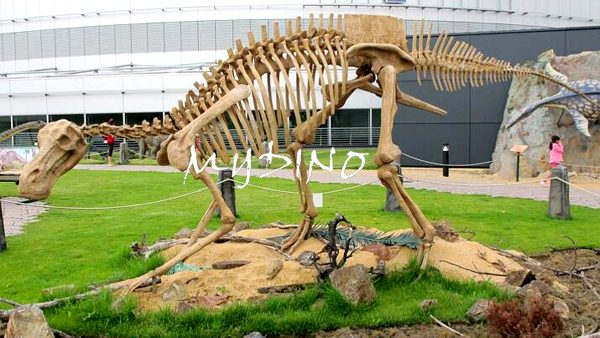 dinosaur skeleton exhibition