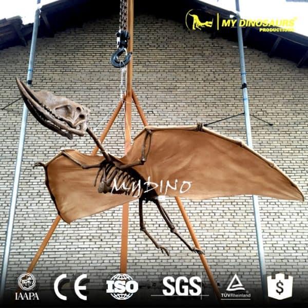 hanging pterosaur skeleton