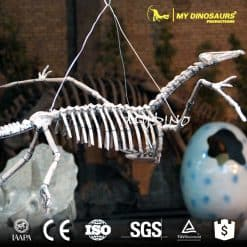 pterosaur skeleton for sale