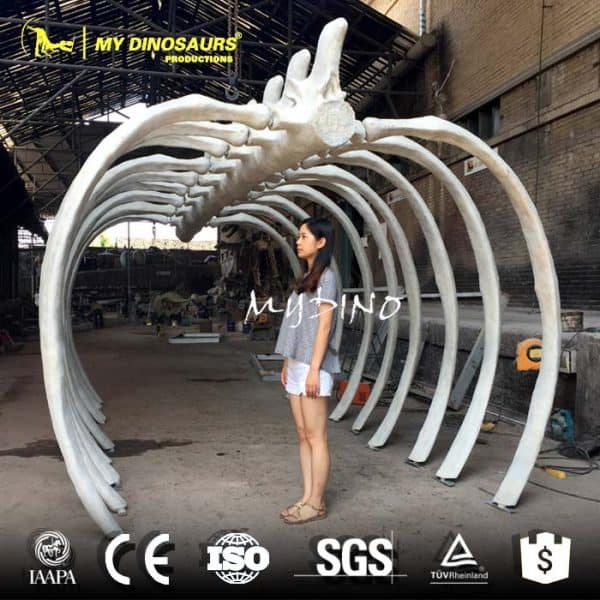 whale skeleton for sale