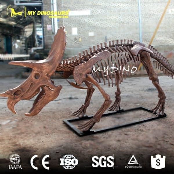 4M Tricerotops Skeleton 1
