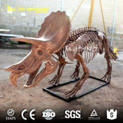 4M Tricerotops Skeleton
