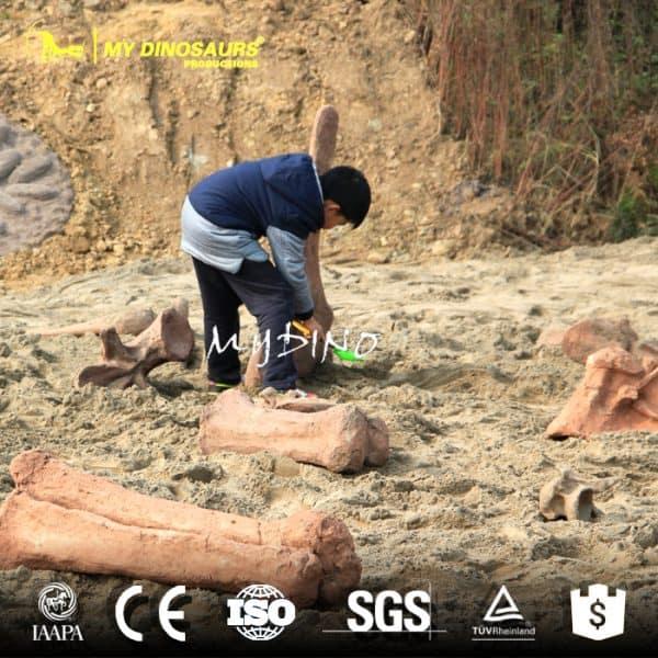 Fossil excavation 1