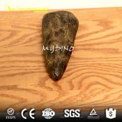 Iguanodon thumb spike