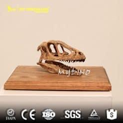 Mini allosaurus skull 1